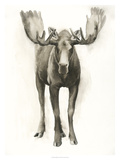 Majestic Wildlife I Giclée par Grace Popp