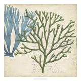 Seaweed Overlay I