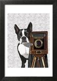 Boston Terrier Photographer