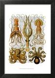 Octopus and squid