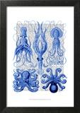 Octopus & Squid Blue