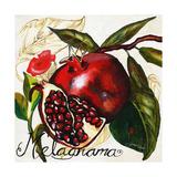 Tuscan Sun Pomegranate