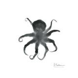 Black Octopus
