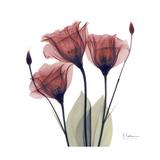Gentian Trio in Red Giclée premium par Albert Koetsier