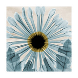Chrysanthemum Close-Up