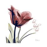 Tulip Live Laugh Love