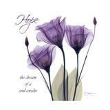 Hope Tulip