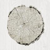 Woodland Years II Reproduction d'art par Sue Schlabach
