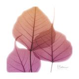 Bo Tree Pink Orange