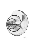 Ramshorn Shell Gray
