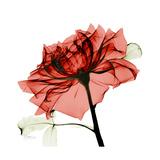Ruby Rose 1