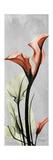 Gray Calla Lily 1