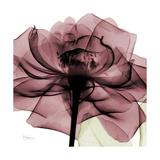 Chianti Rose 2 Giclée premium par Albert Koetsier