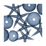 Starfish Blues Giclée premium par Albert Koetsier