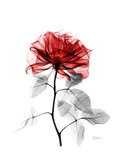 Tonal Rose on White 2