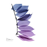 Camelia Leaf in Purp
