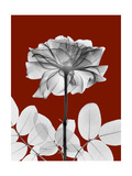 Tonal Rose on Crimson 2