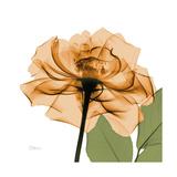 Copper Rose Giclée premium par Albert Koetsier