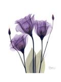 Purple Gentian Triplet