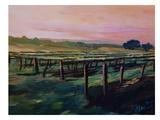 Napa Valley Vineyard During Sunset
