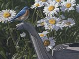 Bluebird Daisies