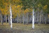 Dixie Forest  UT
