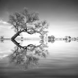 Arbol en Agua 3 BN