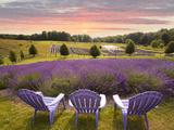 Lavender Chairs  Horton Bay  Michigan '14