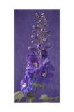 Purple Foxgloves 1
