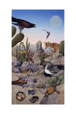 Desert Scene with Falcon and Cactus  a Fox and Other Desert Animals