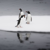 Antarctica Gentoo Penguins Standing on Sea Ice with Reflection