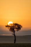Kenya  Maasai Mara  Sunrise Behind Balanites Tree and Hot Air Balloon