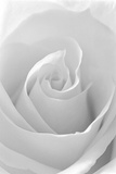 Black and White Rose Abstract Papier Photo par Anna Miller