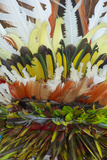 Papua New Guinea  Tufi Detail of Feather Ceremonial Headdress