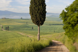 Track  San Quirico d'Orcia  Val d'Orcia  Tuscany  Italy