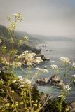 California  Big Sur  View of Pacific Ocean Coastline with Cow Parsley