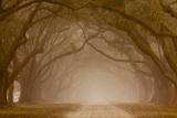 Georgia  Savannah  Fog and Oaks Along Drive at Wormsloe Plantation