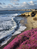 USA, California, La Jolla, Flowers Along the Pacific Coast Papier Photo par Christopher Talbot Frank