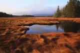 USA  Maine  Marsh Grass and Pond Near Acadia National Park