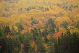 USA  Maine  Acadia NP  Fall Foliage at Acadia NP