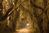 Georgia  Savannah  Savannah NWR  Moss Draped Oaks Along Drive