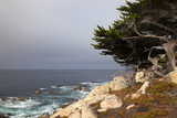 USA  California  Monterey 17-Mile Drive Coast Near Ghost Tree