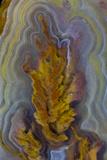 Plume Agate  Sammamish  Washington