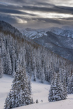 Fresh Snow in Evergreens, Wasatch Mountains, Uinta-Wasatch-Cache, Utah Papier Photo par Howie Garber
