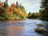 New Hampshire  White Mountains NF  Autumn Colors of Sugar Maple Trees