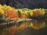 California  Sierra Nevada  Autumn Aspen Trees Reflecting in Grant Lake