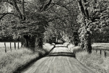 USA  Tennessee  Great Smoky Mountains NP Dirt Road in Cades Cove