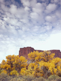 Canyonlands NP  Utah Cottonwoods in Autumn Below Cliffs and Clouds