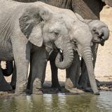 Namibia  Etosha National Park Elephants Drinking at Waterhole