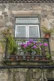 Portugal  Guimaraes  Flowers on Balcony Outside Window